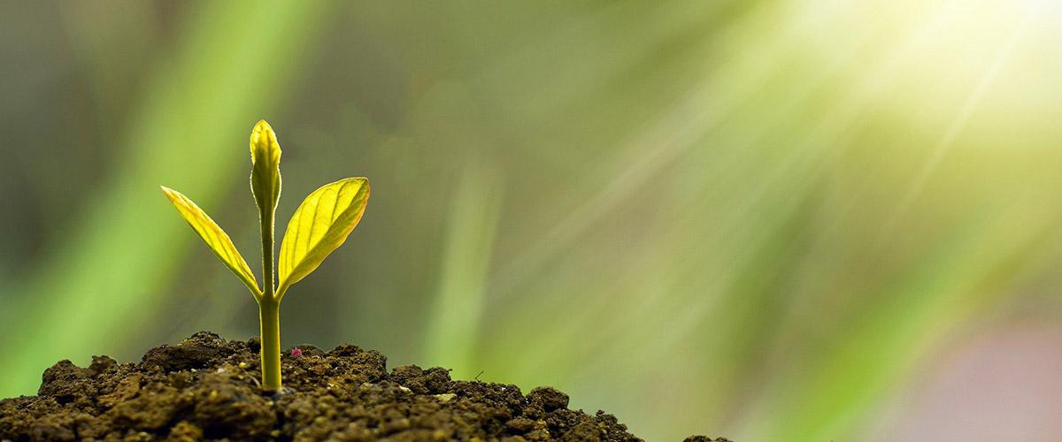 Σύστημα Περιβαλλοντικής Διαχείρισης κατά ISO 14001